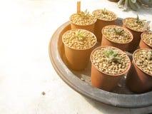 Usine de Haworthia Cymbiformis de huit Succulent images libres de droits