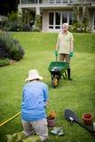 Usine de jardinage supérieure de couples Photographie stock