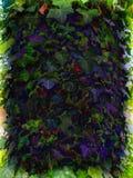 Usine de lierre, couleurs psychédéliques Images libres de droits