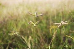 Usine de mauvaise herbe Photos libres de droits