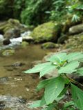 Usine de rivière, nature Images stock