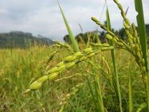 Usine de riz Images libres de droits