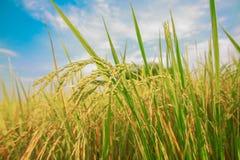Usine de riz Image libre de droits