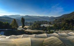 Usine de serre chaude, projet royal, Doi Inthanon Photo libre de droits