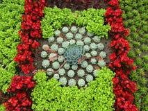 Usine de Succulent de Domfront Photographie stock libre de droits