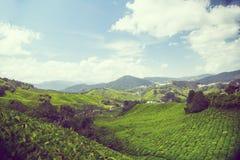 Usine de thé chez Cameron Highland photo libre de droits