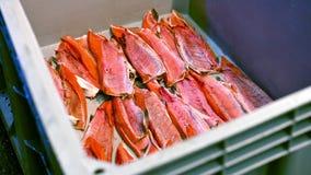 Usine de traitement de poisson de mer banque de vidéos