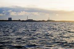 Usine de tuyau du soleil de mer images stock