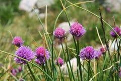 Usine des Pyrénées Image stock