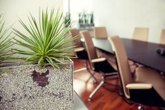 Usine en épi verte dans un bureau vide, salle de conférence Image stock