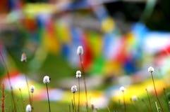 Usine et drapeaux colorés de prière au Thibet Photos libres de droits