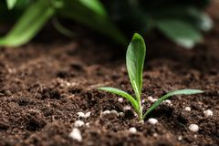 Usine et engrais croissants frais sur le sol Temps de jardinage photographie stock libre de droits
