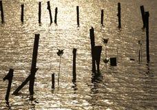Usine et mer Image stock