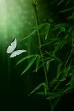 Usine et papillon en bambou image stock