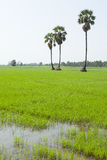 Usine et paumes de riz Images stock
