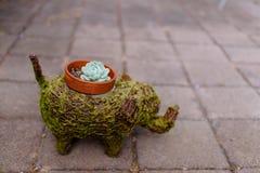 Usine et pot succulents sous forme de vert un éléphant Photos stock