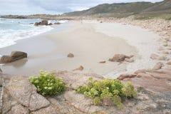 Usine et roche sur la plage de point de Forcados ; Costa de la Muerte Photos libres de droits
