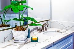 Usine et savons dans la salle de bains moderne Photos libres de droits