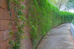 Usine extérieure de mur de briques de courbe Photographie stock libre de droits