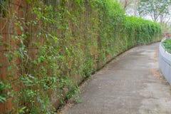 Usine extérieure de mur de briques de courbe Photos libres de droits