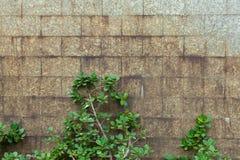 Usine extérieure de mur de briques de courbe Photos stock