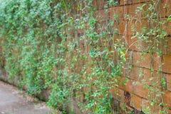 Usine extérieure de mur de briques de courbe Image libre de droits