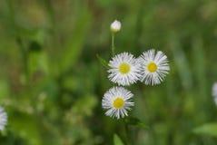 Usine fleurissante sauvage Photos stock