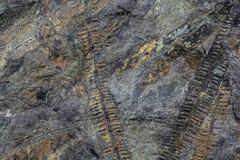 Usine fossile photographie stock libre de droits