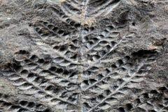 Usine fossile photo libre de droits