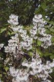 Usine herbac?e ?ternelle image stock
