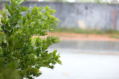 Usine humide dans le jour pluvieux Photographie stock