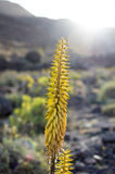 Usine jaune Photographie stock libre de droits