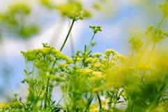 Usine jaune colorée photographie stock libre de droits