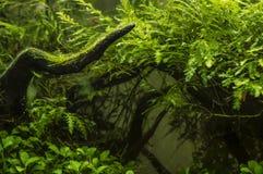 Usine lumineuse sur le fond des algues vertes photographie stock