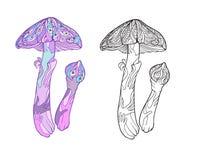 Usine miraculeuse Champignon de couche d'amanite Stoc réglé colorée et d'ensemble Image stock
