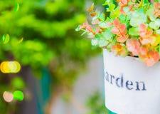 Usine mise en pot de jardin Images stock
