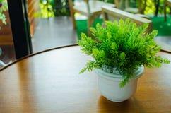 Usine mise en pot sur la table Photo stock