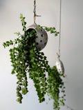 Usine mise en pot verte fraîche, décoration intérieure photo stock