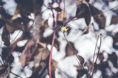 Usine naturelle avec la fleur de couronnement Photographie stock