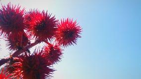 Usine rouge étrange avec des transitoires photos stock