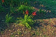 Usine rouge de fleurs avec une tonalité verte image libre de droits