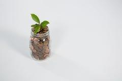 Usine s'élevant dans des pièces de monnaie de l'épargne Photographie stock libre de droits