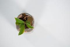 Usine s'élevant dans des pièces de monnaie de l'épargne Image libre de droits