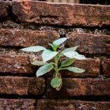 Usine s'élevant des briques criquées de mur Image stock