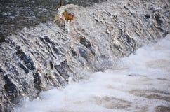 Usine s'élevant en cascade Images stock