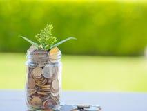 Usine s'élevant hors des pièces de monnaie dans le pot en verre Images libres de droits