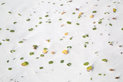 Usine s'élevant sur la plage sablonneuse Photo stock