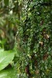 Usine s'élevante sauvage avec les feuilles vertes photos stock