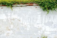 Usine s'élevante sur le mur de briques photo libre de droits