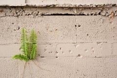 Usine s'élevant du mur de ciment Image stock